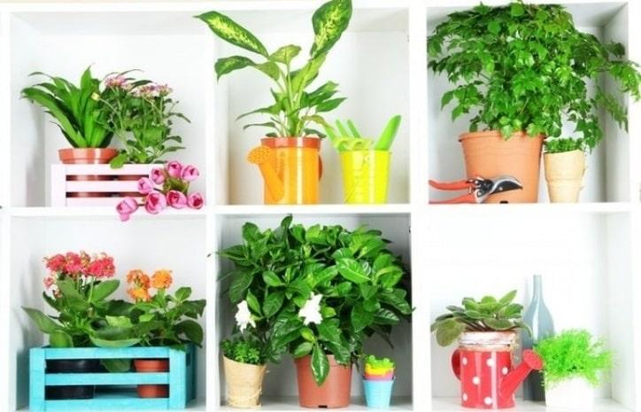 Растения, которые нужны в доме