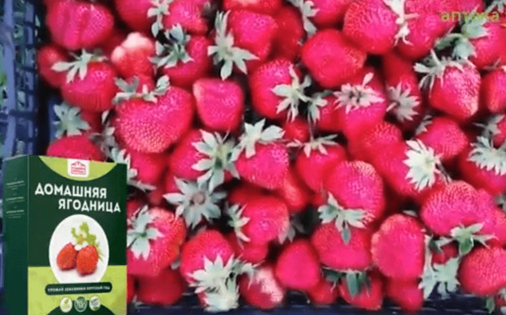 Домашняя ягодница отзывы