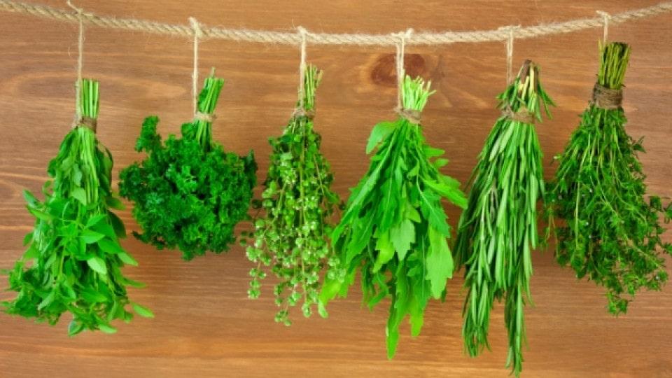 Травы, выращиваемые дома